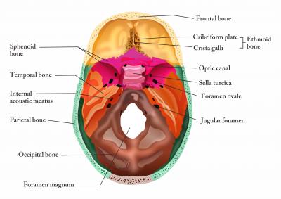 Inside view of Skull